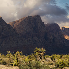 Storm brewing over Mt. Wilson by Brent Huntley - Landscapes Deserts ( desert, d3100, mt. wilson, canyon, travel, storm, landscape, joshua, tamron, panorama, national recreation, photography, las vegas, pano, tree, nevada, red rock, cloud, nikon, Earth, Light, Landscapes, Views,  )