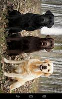 Screenshot of Dogs