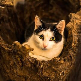 Kitty by Andrei Marius Gheorghiu - Instagram & Mobile Instagram ( ambar_elementals, cat, photo, photography, pic, beautifull, closeup, pisica )