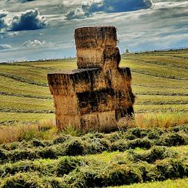 Field Of Dreams by Terry Ricks - Landscapes Prairies, Meadows & Fields ( field, pasture, hay bales, hay, colorado, fields )