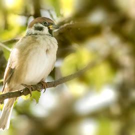Little balcony singer by Jean Bogdan Dumitru - Novices Only Wildlife