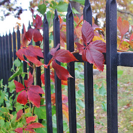 Nature on the Fence by Tina Stevens - Nature Up Close Leaves & Grasses ( plant, fencing, fence, seasonal, nature, colorful, autumn, fall, plants, leaves, , color )