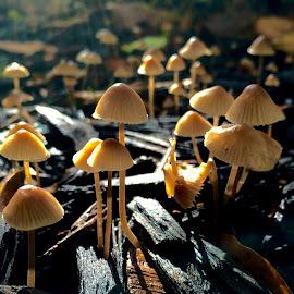 After rain by Ben Liu - Nature Up Close Mushrooms & Fungi ( rain mushroom morning )