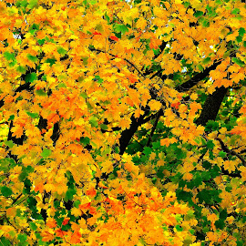 by Lora Grant - Landscapes Prairies, Meadows & Fields ( fall, color, colorful, nature )