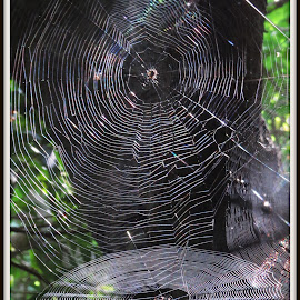 No Way Escape by Kwong Chung-man - Nature Up Close Webs