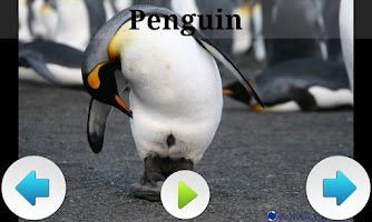 Screenshot of Best Arctic Animals Sounds