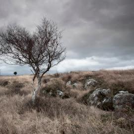 Three Trees by Ian Pinn - Landscapes Weather ( scotland, winter, tree, hawthorn, mull, grasspoint, rain )