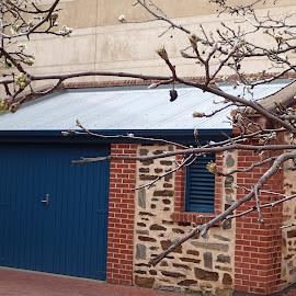 Bluestone hut by Pamela Howard - Buildings & Architecture Public & Historical ( building, winter, hut, bluestone, trees, shedmuseum, blossoms )
