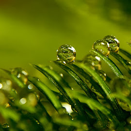 Parade of Dews by Sengkiu Pasaribu - Nature Up Close Natural Waterdrops