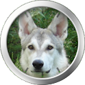 German Shepherd Theme icon