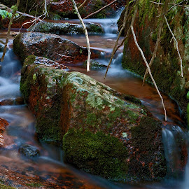 by Todd Yoder - Nature Up Close Water ( water, creek, plants, slow speed, rocks )