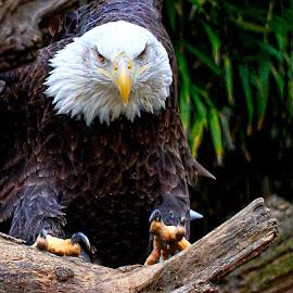 Tight Landing by John Larson - Animals Birds