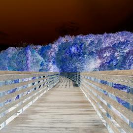 by Kathy Filipovich - Digital Art Places