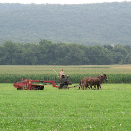 Amish plowing their feilds by Maria Harting - Landscapes Prairies, Meadows & Fields
