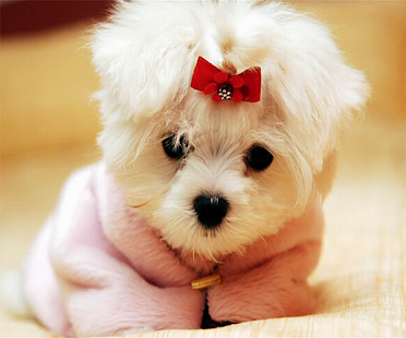 Cute Dog Live Wallpaper - screenshot