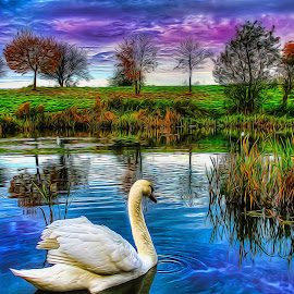 Swantastic by Catherine Cross - Digital Art Animals ( clouds, water, bird, reflection, sky, trees, swan, lake, landscape, feathers, pond )