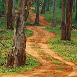 Jungle path by Vivek Raut - Landscapes Forests ( zigzag path, forest path, natural path, jungle path, path, nature, landscape )