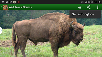 Screenshot of Wild Animal Sounds