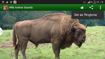 Screenshot of Wildlife Sounds