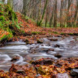 Morning in Forest by Siniša Biljan - Landscapes Forests