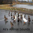 Ali's Animal Sounds icon
