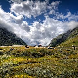 by Svein Hurum - Landscapes Mountains & Hills