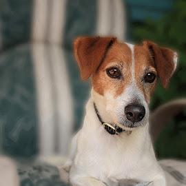 Floyd by Barbara Pobjoy - Animals - Dogs Portraits