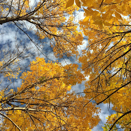 Ohio Fall  by Mitch Dimauro - Backgrounds Nature