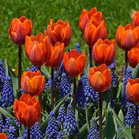 Springtime Flowers by Patricia Tracy - Flowers Flower Gardens
