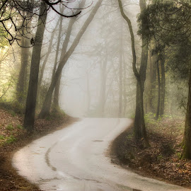 walk into the foggy mist. by Shawna Campbell - Landscapes Forests