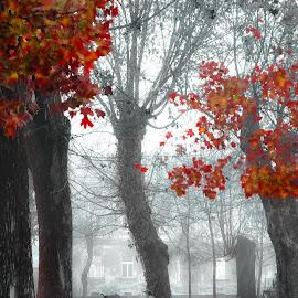 Park in a misty morning by Manuela Dedić - City,  Street & Park  City Parks