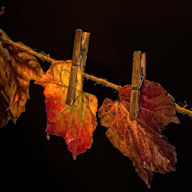 To dry by Rucsandra Calin - Artistic Objects Still Life ( concept, still life, leaves )
