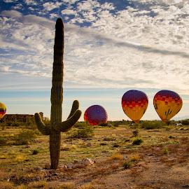 Desert Liftoff by Mike Karels - Landscapes Deserts ( hot air balloon, vacation, california, 2015, arizona, balloon, phoenix )