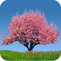 Spring Trees Live Wallpaper icon