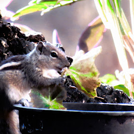 by Sristi Yadav - Novices Only Wildlife ( plant, eating, leaves, squirrel, pot,  )