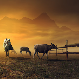 go home by Hendra YM - Digital Art People ( home, petani, back, cow, people, manipulation, animal )
