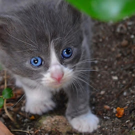 lost kitten by Julian Markov - Animals - Cats Kittens