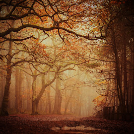 by Marie Parish - Landscapes Forests