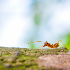 Anty by Siha Sao - Nature Up Close Other Natural Objects ( macro, nature, ant, small, closeup )