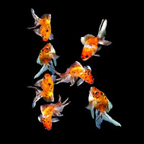 Goldfish K by Janna Morrison - Typography Single Letters ( k )