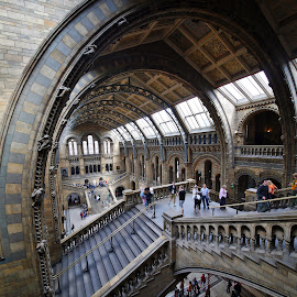 wide at NHM London by Almas Bavcic - Buildings & Architecture Other Interior