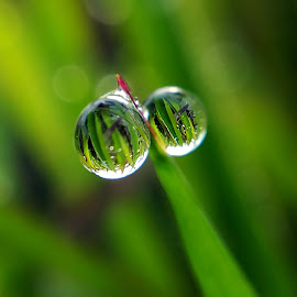 twin dew by Saefull Regina - Nature Up Close Natural Waterdrops