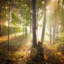 Rays by Ben Thomas - Landscapes Forests ( moutain, ray, georgia, trees, sunrise, sun )