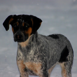 Gracie by Christie Henderson - Novices Only Pets ( snow )