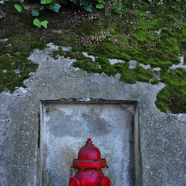 Hydrant by Tina Cantarinha - Travel Locations Landmarks ( alcatraz )