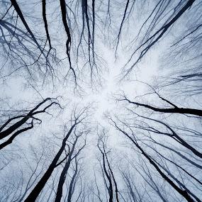 winter mood, creepy 2 by Giuseppe Conti - Landscapes Weather ( inverno, colore, paesaggio )