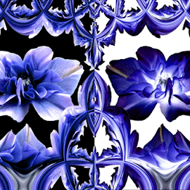 Ornate by Tina Dare - Digital Art Abstract ( abstract, patterns, inverted art, designs, distorted, texture, inverted, flowers, blues, shapes )