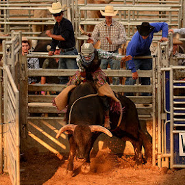 SUPER Kicker Rodeo by Kourtney Monroe - News & Events Entertainment ( cowboy, event, people )