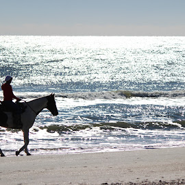 Thanksgiving Ride by Kevin Wright - Novices Only Pets ( water, sand, horse, ocean, beach, sunrise, thanksgiving, myrtle beach )