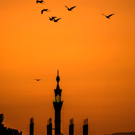 sunset flight by Vibeke Friis - City,  Street & Park  Skylines ( mosque, sunset, birds, egypt,  )